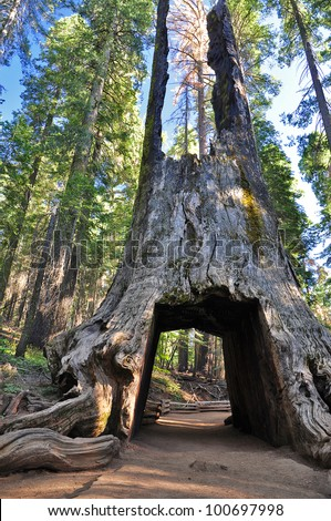 Sequoia Gate in Yosemite National Park, USA