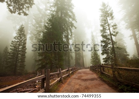 Sequoia National Park in USA - stock photo
