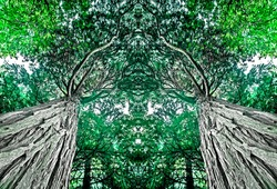 sequoia tropical tree view from below. Specular surreal embrace of plants. Trees hug,  sometimes. We just have to look at them better. Monochromatic modern wall art furniture. Total green color.