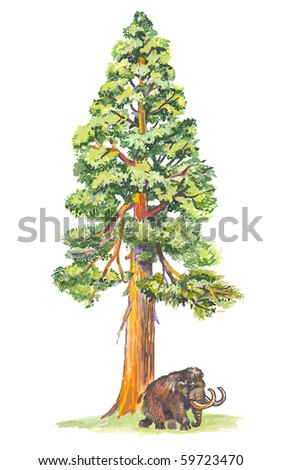 Sequoiadendron (Mammoth tree) the largest tree in the world.