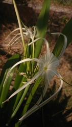 Serdang, Malaysia - January 17th 2021 - Beautiful flower