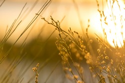 Serene and heavenly golden light cascading across reeds by a beautifully lit lake