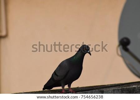 Serene avian beauty red eyed #754656238