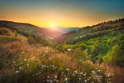 Serene flower field landscape in beautiful setting late summer towards autumn