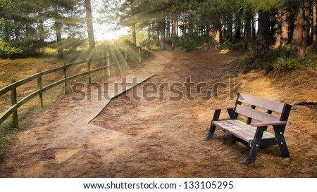 Serene rural path in the forest winding into the distance with an empty bench in the foreground and rays of light shining through the trees