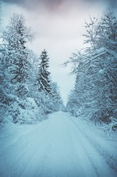 Serene winter moody scene.Landscape with empty forest road and snow-covered trees after heavy snowfall.Winter nature background.Concept of winter nature for design.