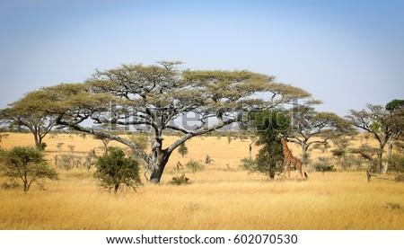 Serengeti Landscape, Tanzania  Foto stock ©
