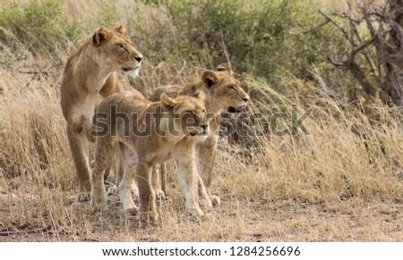 Serengeti National Park, Tanzania #1284256696
