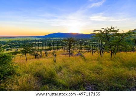 Serengeti savanna landscape with road at sunset in Tanzania, Africa.