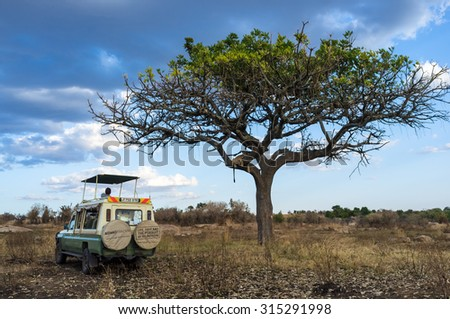 SERENGETI, TANZANIA - AUGUST 27, 2015: Safari car stops to observe a lioness laying down in the tree in the Serengeti National Park, Tanzania, Africa