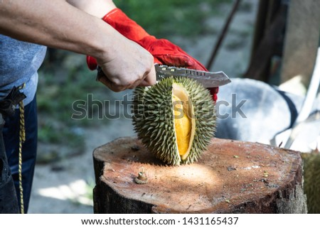 Series of person cutting open freshly harvested organic durian with knife