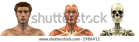 Series of three anatomical 3D renders depicting a man facing front, head and shoulders, muscles and skull. These images will line up exactly, and can be used as overlays to study anatomy.