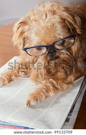 Serious dog in glasses reading the newspaper - stock photo