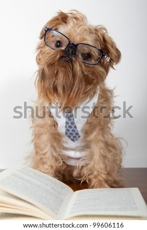Serious dog in the glasses is on the books