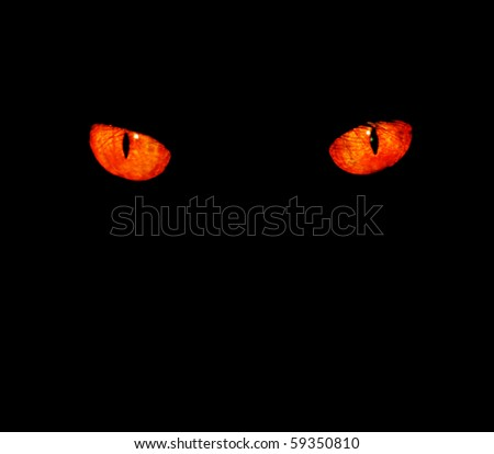 Serious, evil animal eyes stare at something in black,