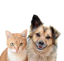 Serious ginger red cat and smiling brown mixed-breed dog isolated on white background. Portrait of dog and cat.