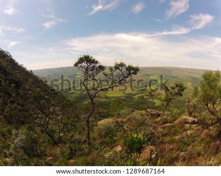 Serra da Canastra National Park - Minas Gerais - Brazil. The beauty and diversity of the Brazilian cerrado.
