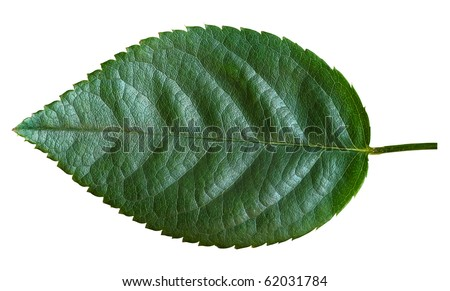 how to catch zapados leaf green cheat codes