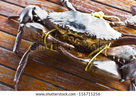 Serrated mud crab in Kood island