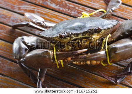 Serrated mud crab in Kood island
