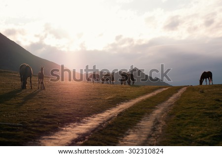 ses grazing in the meadow on a background of mountains in the sunset / Horses at sunset / horses
