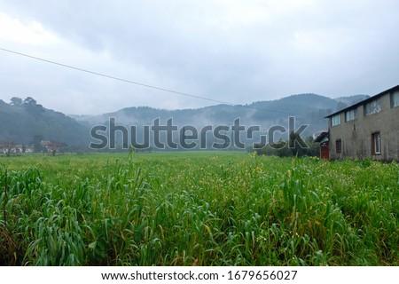 Sesame fields in winter time Stok fotoğraf ©