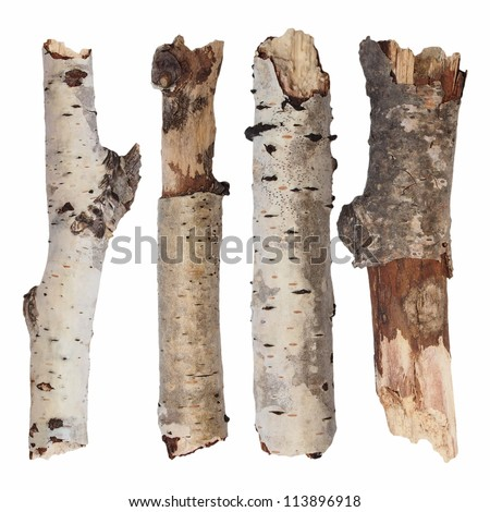 set branch birch isolated on white background