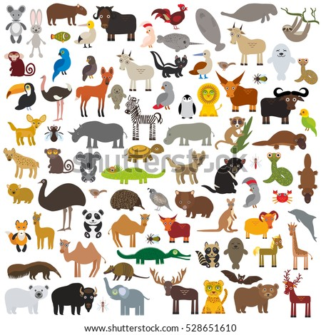set Cartoon Animals from all over the world. Australia, North and South America, Eurasia, Africa isolated on white background.