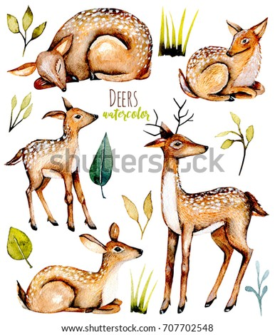 Set, collection of watercolor deers, baby deers and floral elements, hand painted isolated on white background