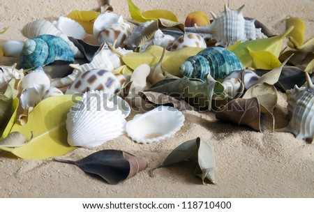 set different seashells on sand background