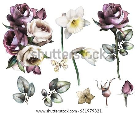 Set elements of rose and narcissus. Collection garden and wild flowers, branches, illustration isolated on white background, bud, herbs. Watercolor style