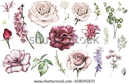 Set elements of rose, peonies. Collection garden and wild flowers, branches, illustration isolated on white background, eucalyptus, bud, exotic leaf, herbs. Watercolor style