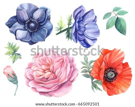 set flowers blue anemones  rose ...