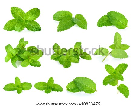 Shutterstock Set Fresh mint isolated on the white background.