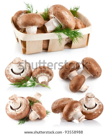 set fresh mushroom champignons with twig dill isolated on white background
