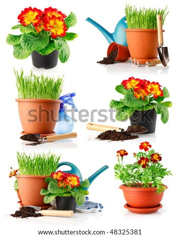 set garden grass and flowers in the pots isolated on white background