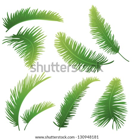 Set green branches with leaves of palm trees on a white background. Drawn from life.