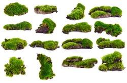 Set Green moss isolated on white bakground