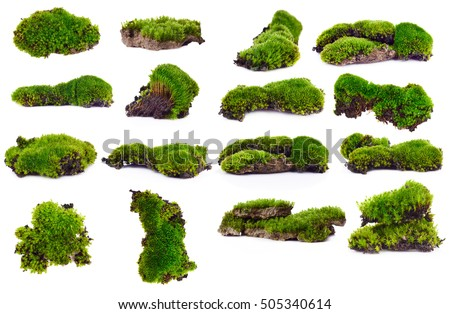 Set Green moss isolated on white bakground
