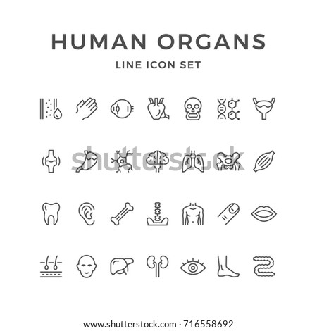 Set line icons of human organs isolated on white
