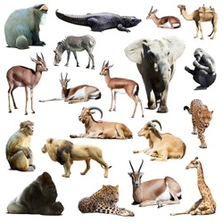 Set of african animals. Isolated on white  with shade