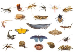 Set of animals isolated on white background, insect fish and reptile