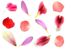 set of 12 assorted flower petals: rose, chrysanthemum and lily, carnation, magnolia