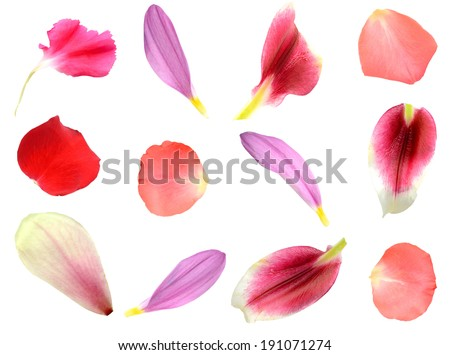 set of 12 assorted flower petals: rose, chrysanthemum and lily, carnation, magnolia #191071274