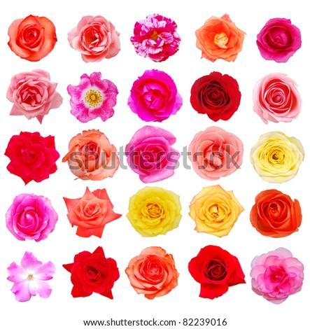 Set of 25 assortment roses