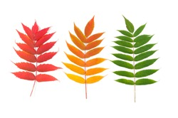 Set of autumn colored leaves on white background