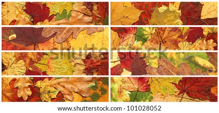 Set of banners made from autumn leaves. Design element. Isolated.