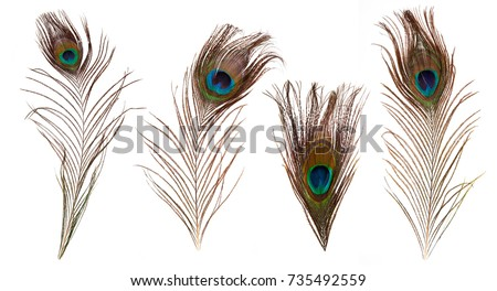 set of beautiful and colorful peacock feathers isolated on white background #735492559