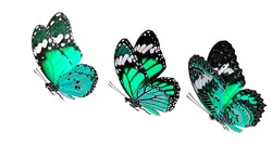 Set of beautiful flying pale green butterflies isolated on white background