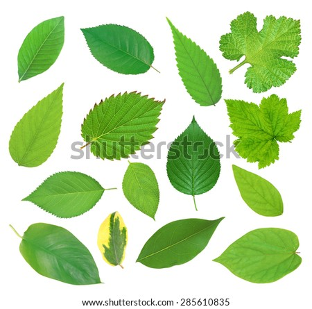 Set of beautiful green spring leaves isolated on white #285610835